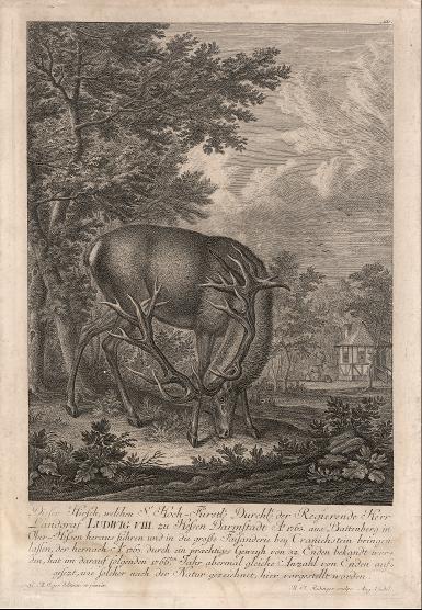 Hirsch im Gehege