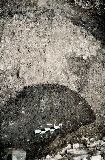 Die Apsis der Albanikirche. Die Mörtelreste der Ausbruchsgrube zeichnen sich hell vom umgebenden Erdreich ab.