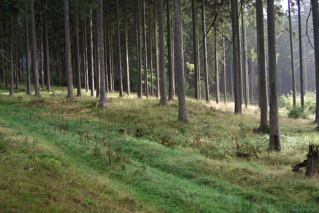 Einer der Grabhügel von Wichtshausen von Süden.