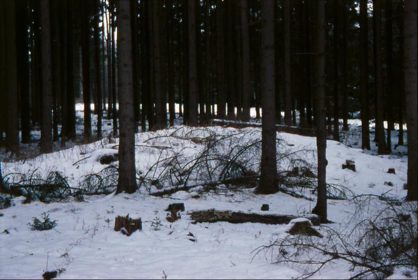 Unweit des Grabhügels befindet sich das Gräberfeld Silbachshöhe mit acht Hügeln.
