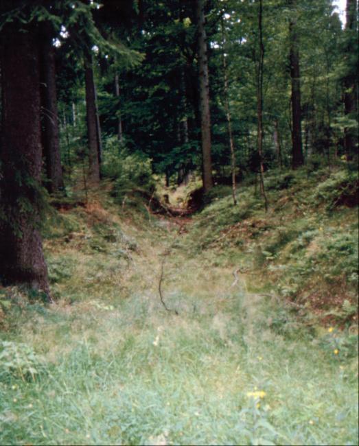 Blick in den Dreisbachhohlweg.