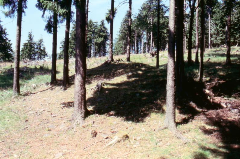Der Blick auf die Grabhügel von Süd nach Nord.