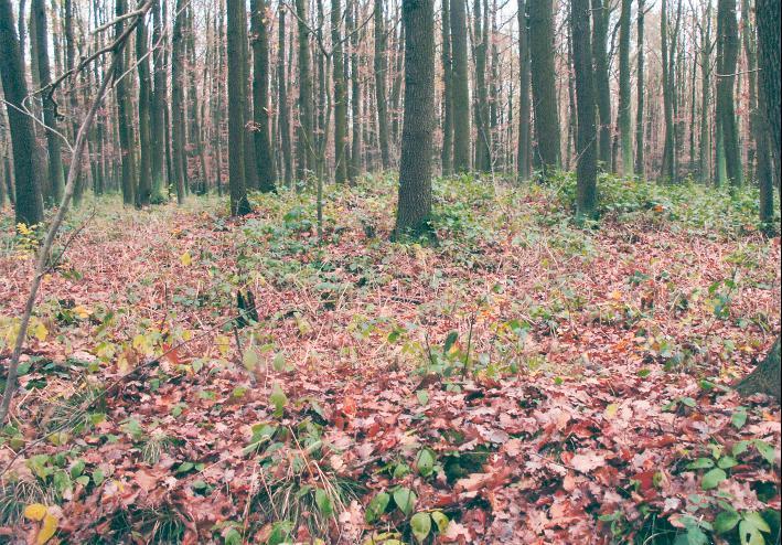 """Einer der beiden Grabhügel in den """"Eichstauden"""" liegt im Wald nahe des Weges."""