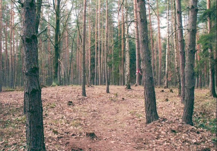 """Einer der Hügel im """"Klosterholz""""."""
