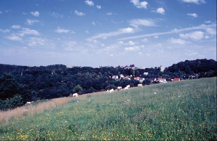 Blick von der Anhöhe über Berga/ Elster auf den Schlossberg (links) und Albersdorf (rechts im Hintergrund).