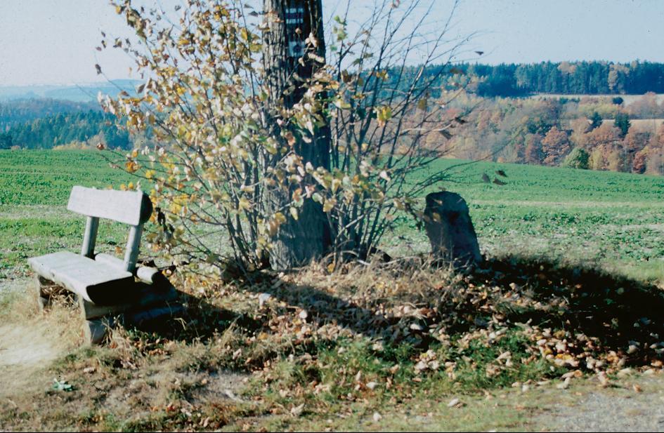 Das Steinkreuz von Albersdorf befindet sich direkt an der Linde.