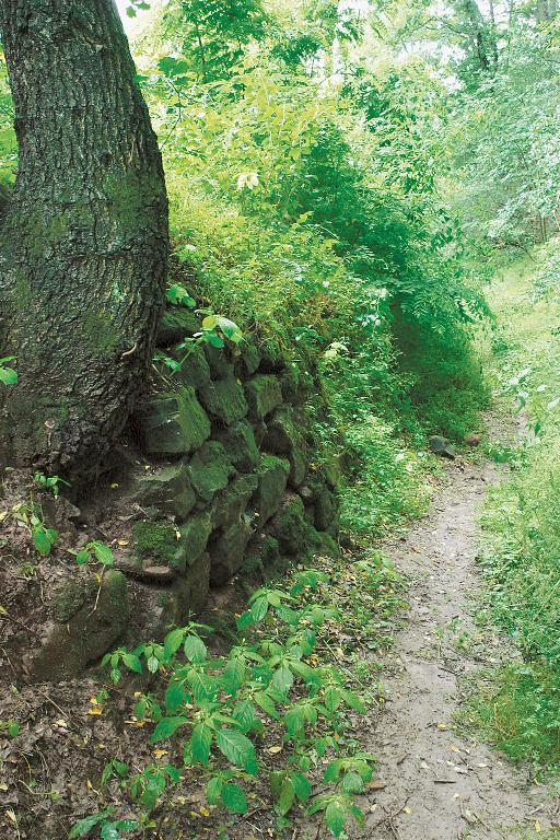 Direkt unterhalb des Georgenbergs verläuft ein alter Hohlweg in Richtung östliche Hochfläche.