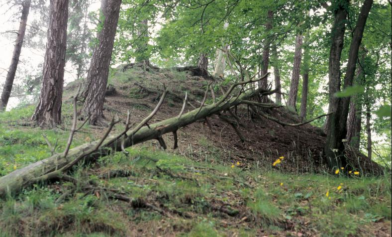 Vielleicht ist dieser Hügel der Rest des ehemaligen Bergfrieds der Großen Rabsburg.