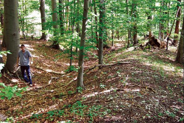Die Alte Burg liegt versteckt im Nationalpark Hainich.