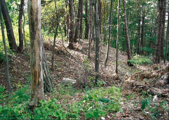 Das Burgplateau der Malittenburg wird von Graben und Wall abgeriegelt.