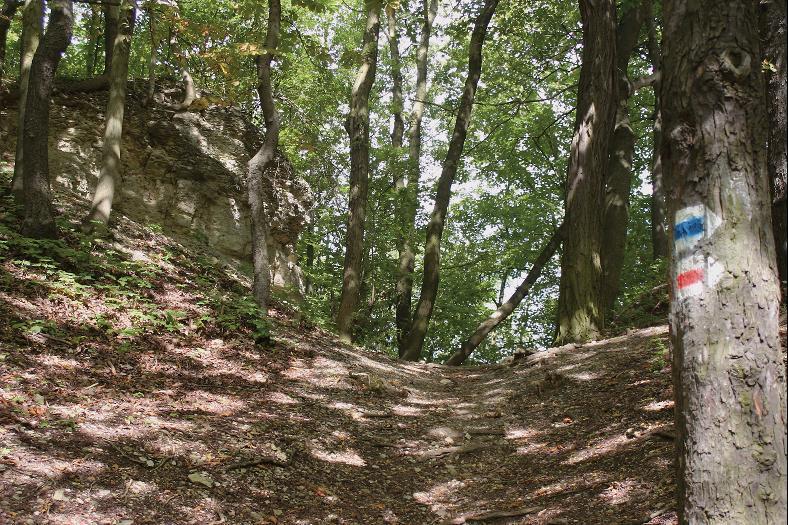 Der Halsgraben schützte die Burg nach Nordosten und wurde tief in den Muschelkalk gehauen.