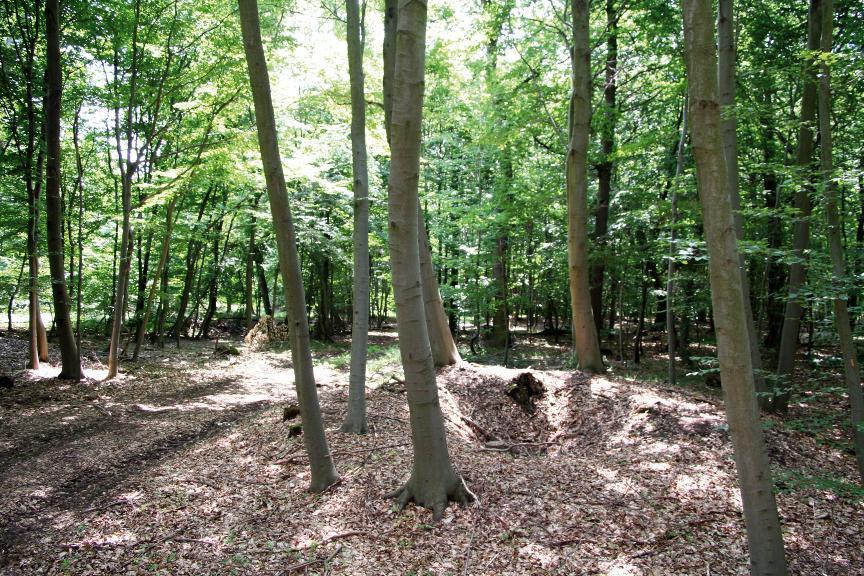 Überreste des Duckelbergbaus im Rathsfeld.