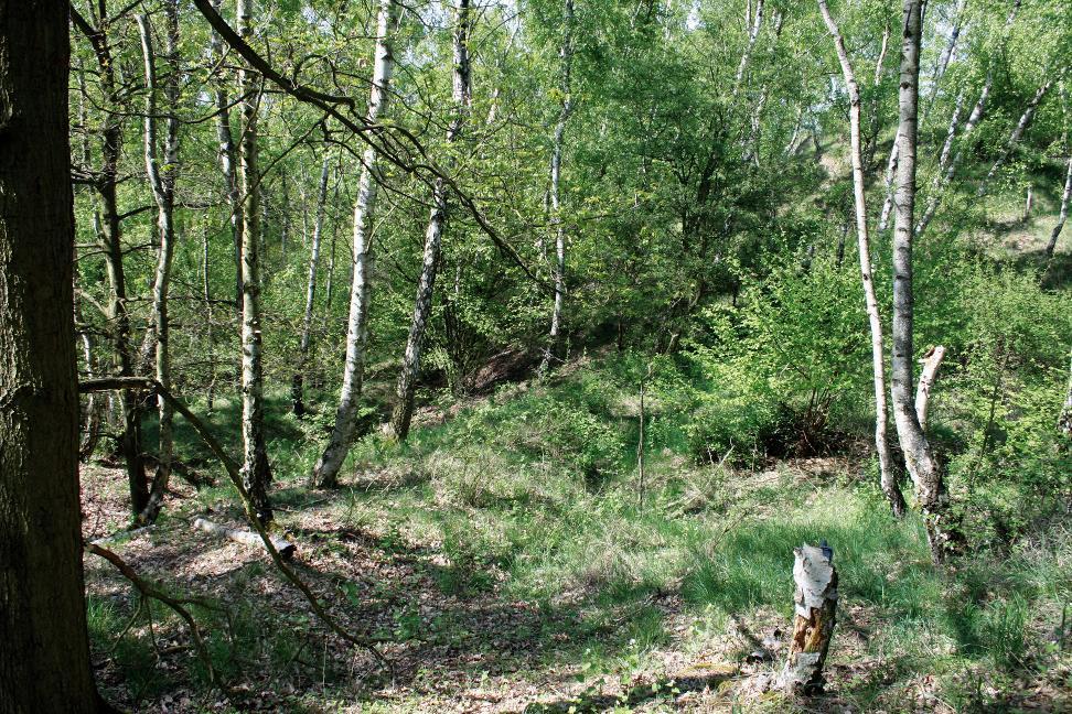 Reste des Wall-Graben- Systems auf dem Schlossberg bei Badra.