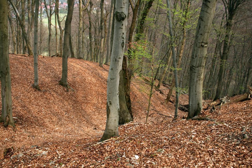 Die Wallanlage auf dem Heiligen Berg bei Großfurra.