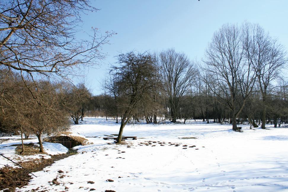 Der Ingelstedter Grund war früher Standort einer Siedlung.