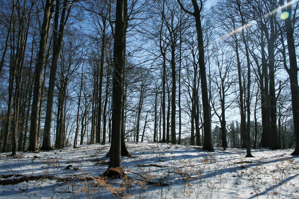 Grabhügel wie dieser bei Großbrüchter sind meist nur im lichten und unterholzfreien Wald zu entdecken.