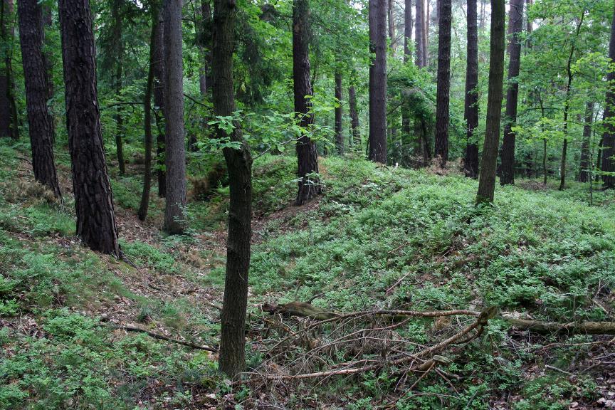 In den Waldgebieten bei Neustadt/ Orla haben sich zahlreiche Hohlwege erhalten.