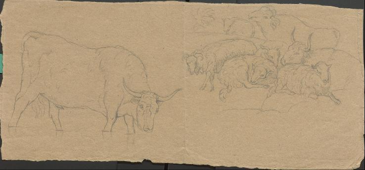 Rinder und Schafe